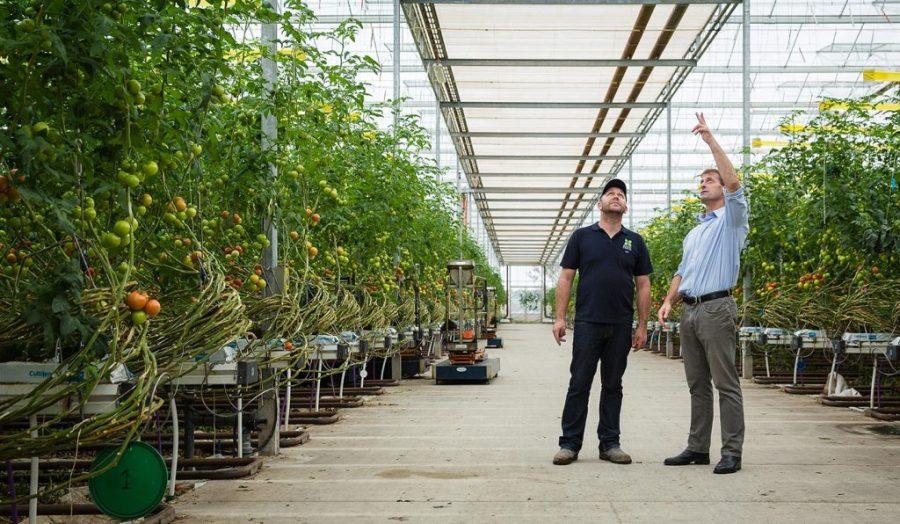 why achmea risk specialist walks_farm