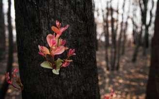 incendios-australia-crecen-flores-plantas-naturaleza