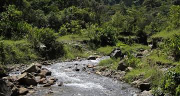 Medellín implementa novedosa estrategia para cuidar el medio ambiente: pago por servicios ambientales