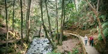 """Parque Arví, finalista en la categoría """"Destino"""" del premio Tourism for Tomorrow"""