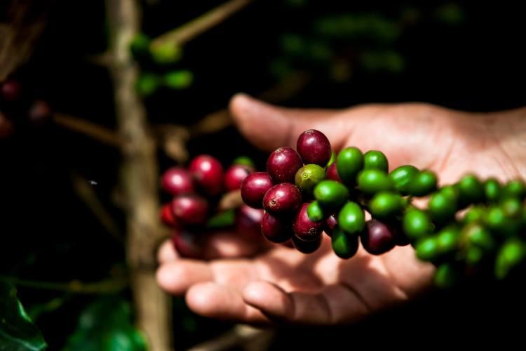 Clúster de café Medellín y Antioquia
