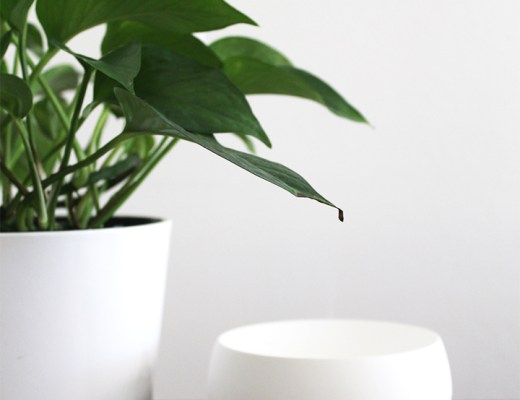 Benefits of an Essential Oil Diffuser
