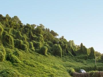 lush and varied landscape overrun by kudzu