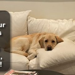 Denver Sofa Cleaning Extra Long Reclining Upholstery Brighton Stain Removal Acme Clean At We Ve Been Serving Our Neighbors Since 1967 Over The Years Answered A Lot Of Questions About How Process Works