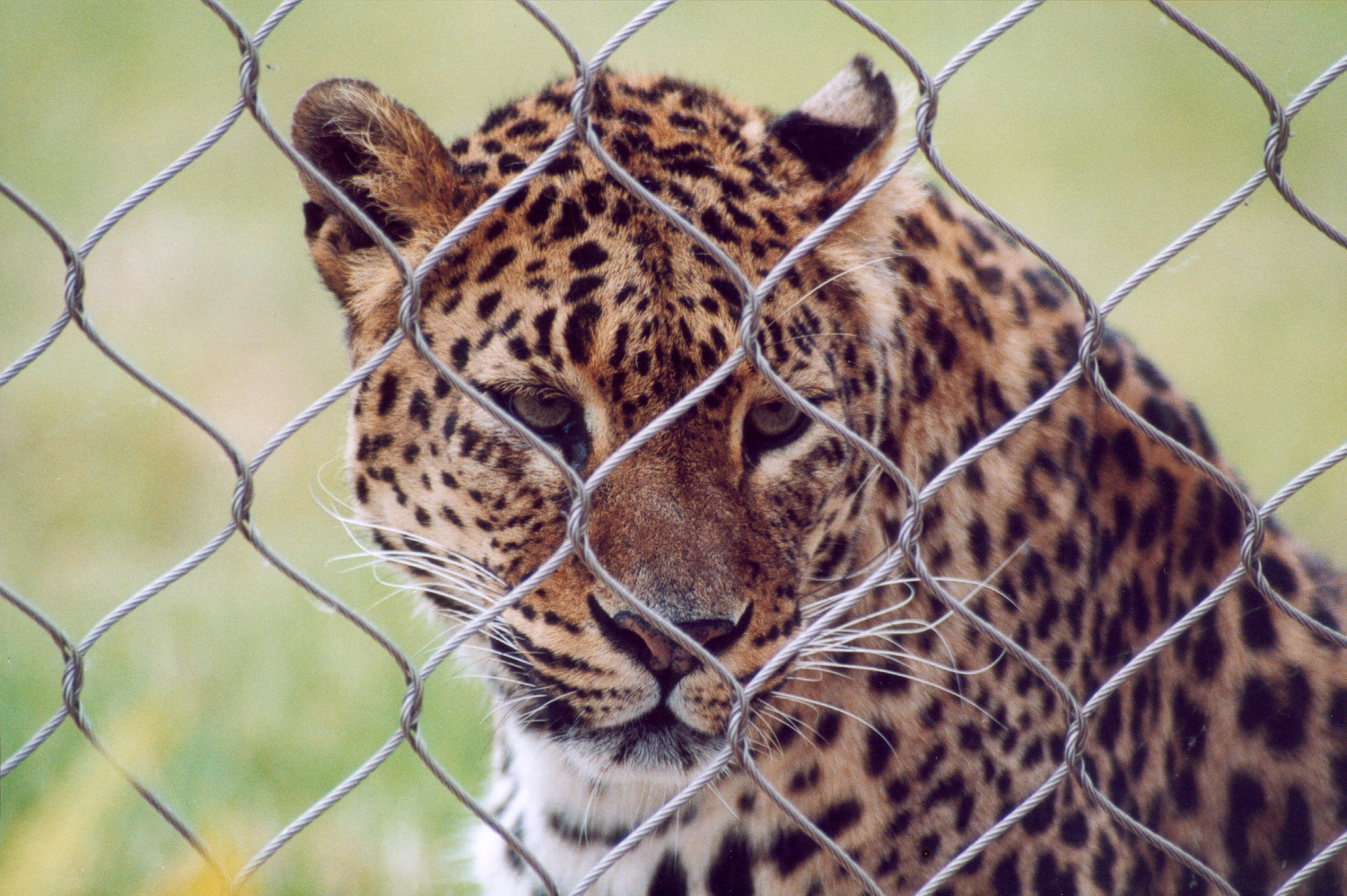 is it right to keep animals in zoo Zoos: pitiful prisons  zoos teach people that it is acceptable to interfere with animals and keep them  encourage your local zoo to stop breeding animals,.
