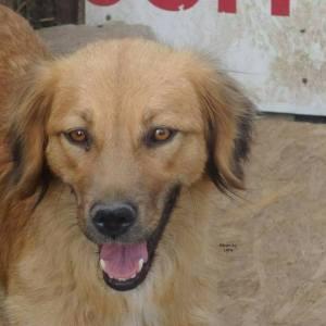 TOSCANA - Adoptie honden - A comfort zone for animals