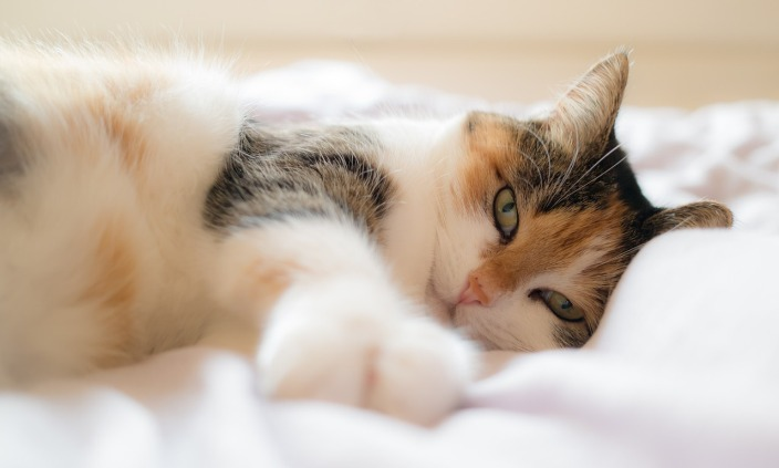 cat lounging on bed