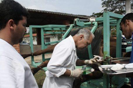 Adab abre vagas para médicos veterinários