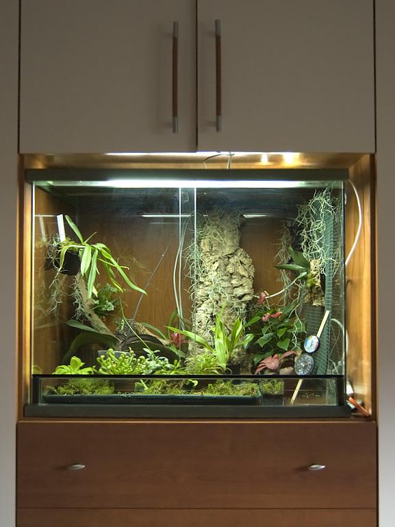 terrario con orchidee piante carnivore e altre piante tropicali  Acquariando consigli per acquari con pesci piante e coralli