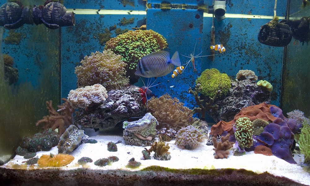 Acquario marino tropicale 80x55x55 Easy LPS