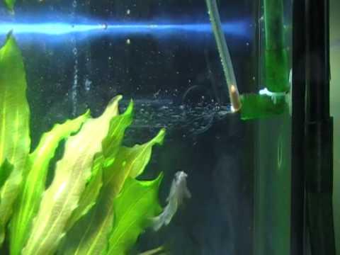 co2 acquario