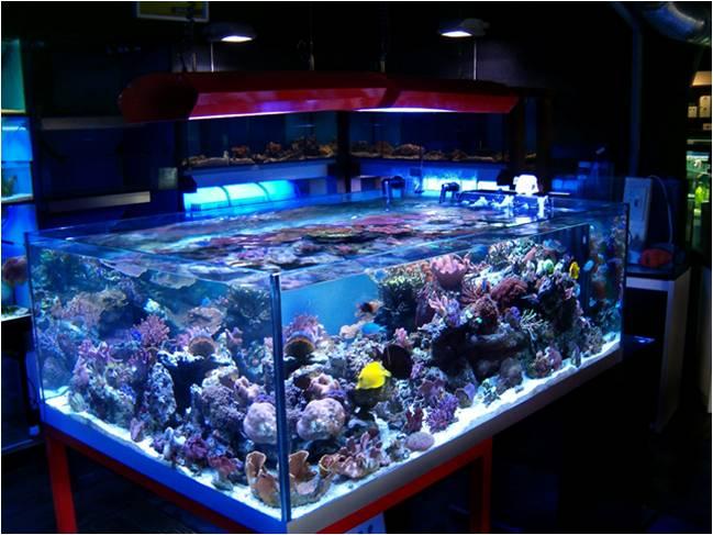 Quante ore di luce servono all acquario acquario facile