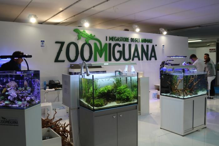 NaQ2015_2_zoomiguana