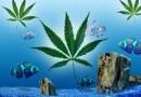 Lo sapevate? La cannabis non ha effetto sui pesci