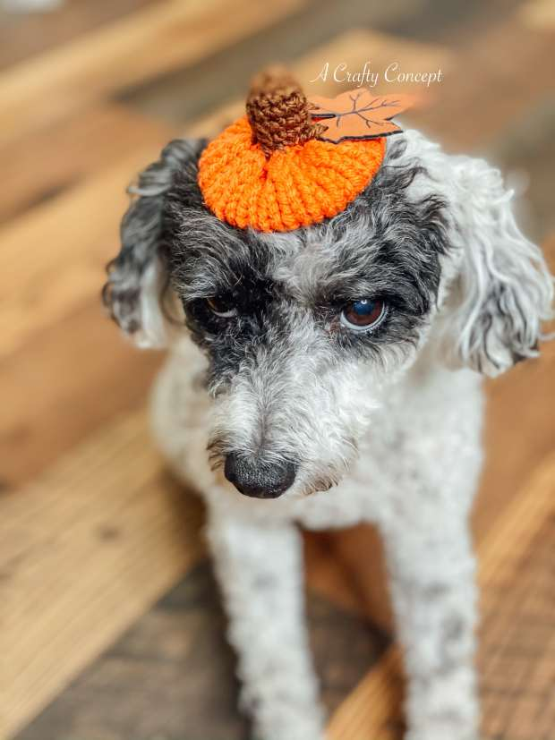 Learn how to make an adorable machine knit pumpkin bow in under 10 minutes from start to finish! Includes full video tutorial.