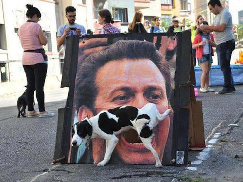 imagem-cachorro-momento-certo