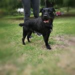 Siri, Patterdale, 1-2 years old, Male