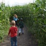 Inside Lacombe Corn Maze