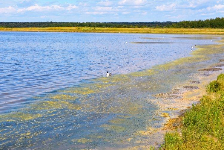 Miquelon Lake