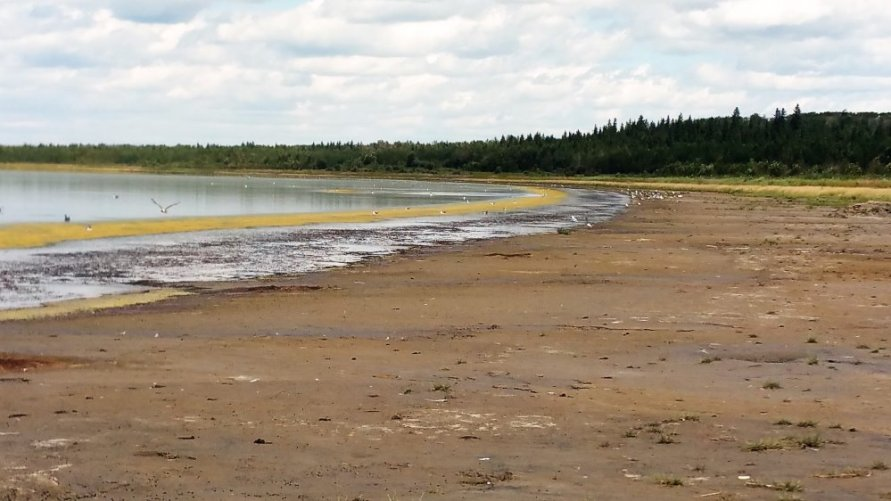 Shoreline at Miquelon Lake Provincial Park