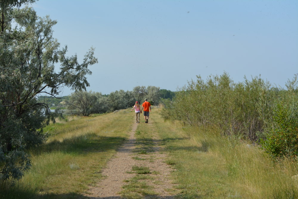 dual track dirt trail through wetland