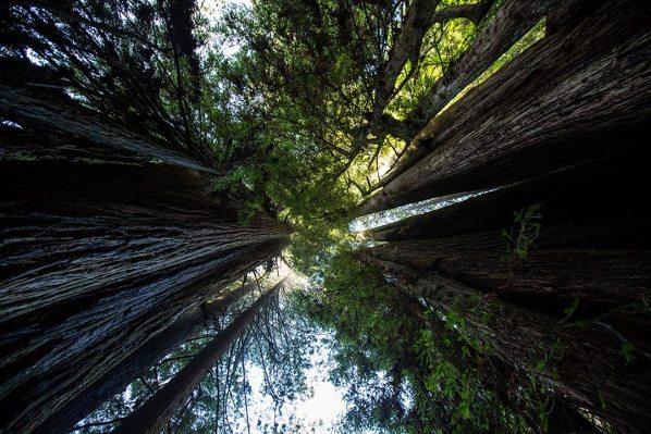 Teilweise sieht man den Wald vor lauter Bäumen nicht mehr.