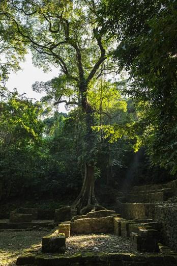 Die alten Mauern werden vom Dschungel in Besitz genommen.