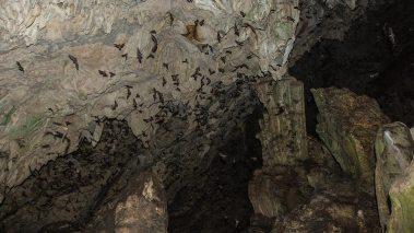 Tausende Fledermäuse verlassen die Höhlen am Abend.