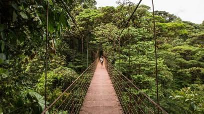 Mit Hilfe von Brücken kann man die oberen Schichten vom Wald betrachten.