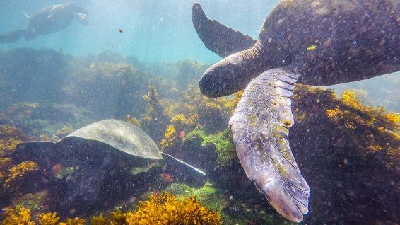 Wir sehen immer mehr Meeresschildkröten.
