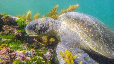 Schon wieder... Meeresschildkröte.