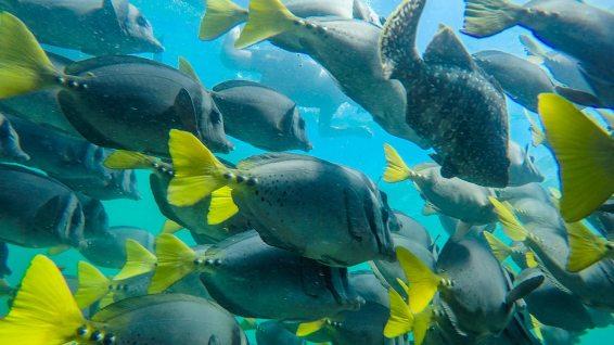 Wir sind umgeben von tausenden von Fischen.