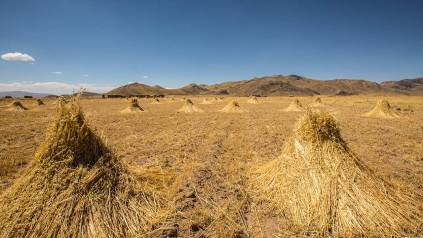 Bio-Getreide in Hügelform ;)