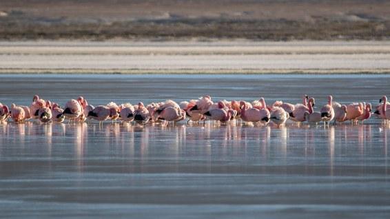 Morgens ist es teilweise so kalt, dass die Flamingos in der Lagune eingefroren sind.