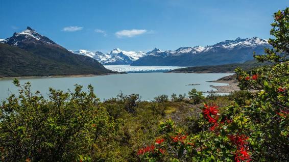 Der Perito Moreno Gletscher ist einer der wenigen, der nicht schrumpft.