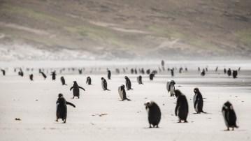 Hier leben Magellan-, Rockhopper-, Gentoo- und Königs-Pinguine.