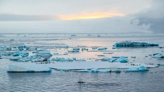 Scheisse! Die Minky-Whales sind weg. Dann versuch ich's mal bei den Pinguinen.