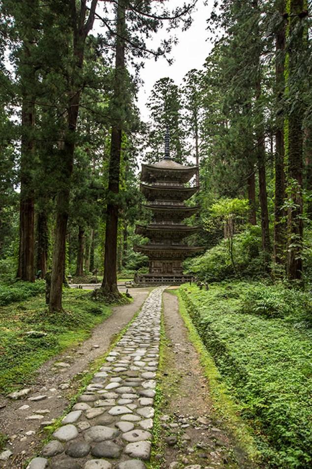 Der gesamte Weg ist gesämt von riesigen, jahrhunderte-alten japanischen Zedern.