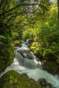 Im feuchten Regenwald ist alles von Moos überwachsen.