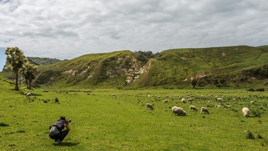 Am Anfang ist jedes Schaf noch interessant.