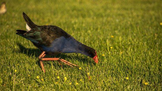 Diese Vogel-Art sahen wir noch recht häufig.