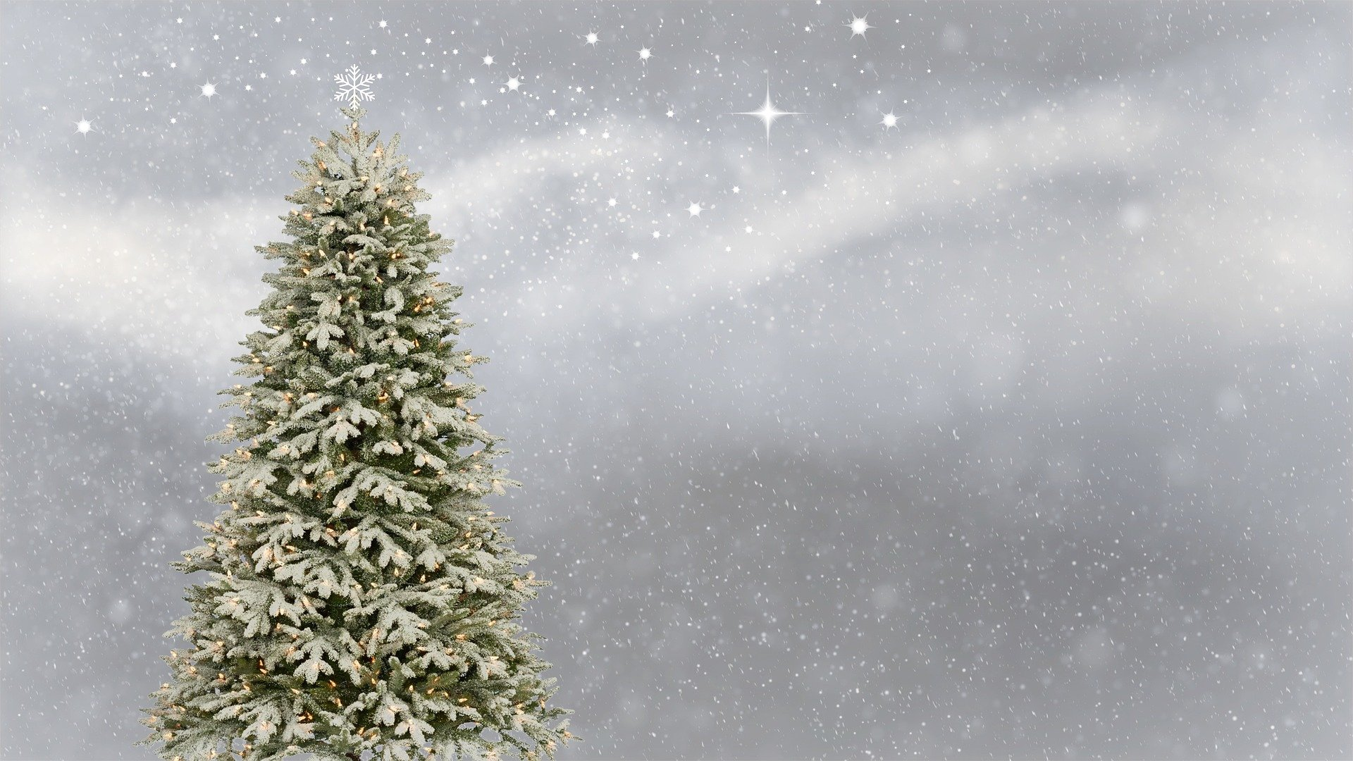 Real or artificial Christmas trees