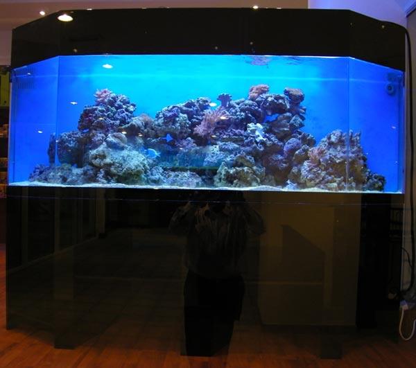 acrylic-fish-tank-012