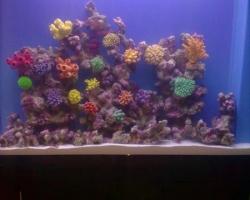 acrylic-fish-tank-017