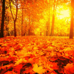 How To Create Amazing Seasonal Content For Autumn