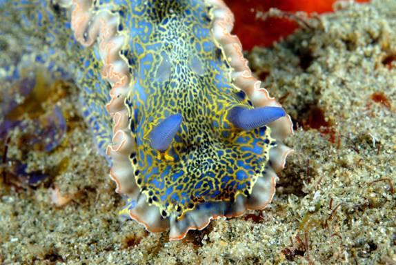 Resultado de imagen de el famoso arrecife Buccoo