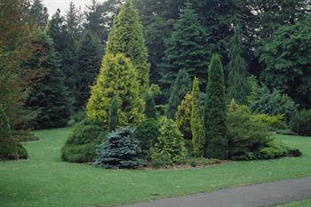 Garden Design Ideas With Conifers Study Learn Garden Design At Home