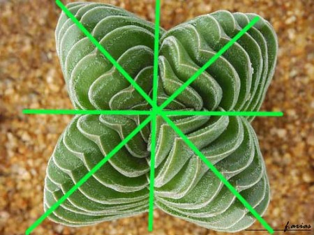simetria-natural-04
