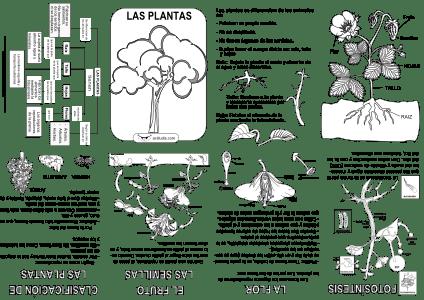Mini-libro-Las Plantas