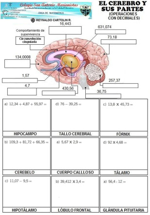 cerebro (1)
